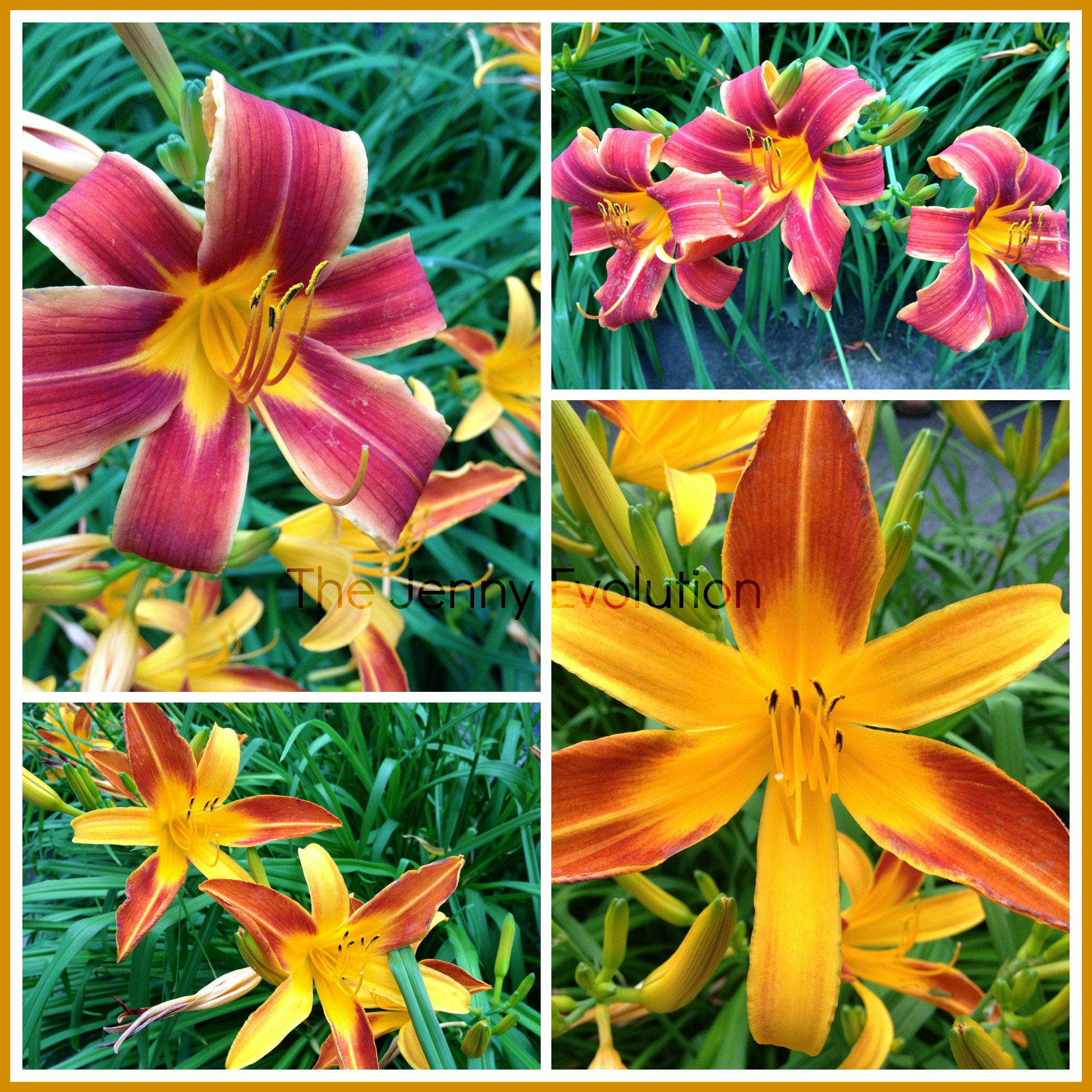 Wordless Wednesday: Birthday Lilies