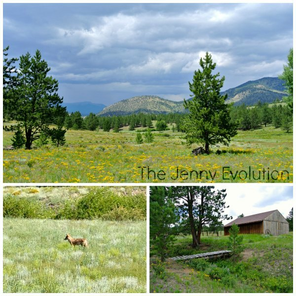 Central Colorado Collage1