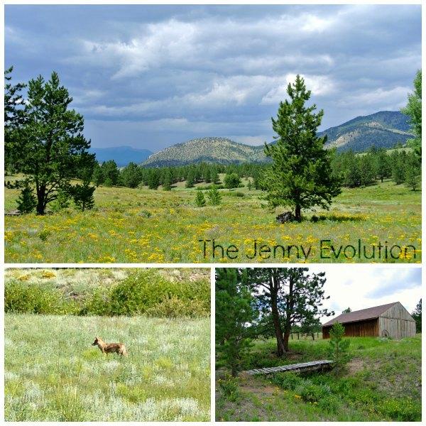 Central Colorado Collage1