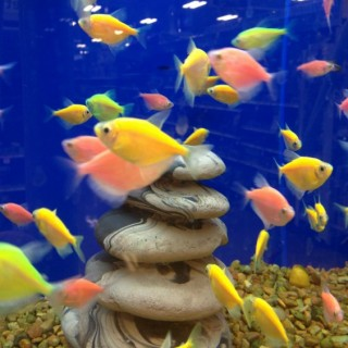 The Fish Died. Now What? What To Do When the Fish Dies