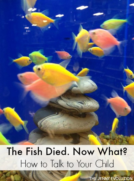 The Fish Died. How to Talk To Your Child