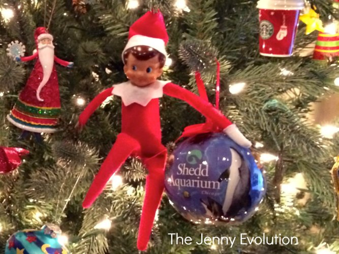 We just love the Shedd Aquarium and so does our elf! #elfontheshelf #sheddaquarium