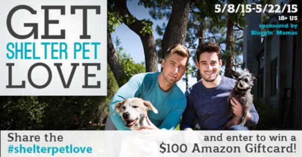 #shelterpetlove $100 Amazon Giftcard Giveaway