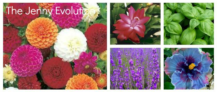 Sensory Gardening Ideas