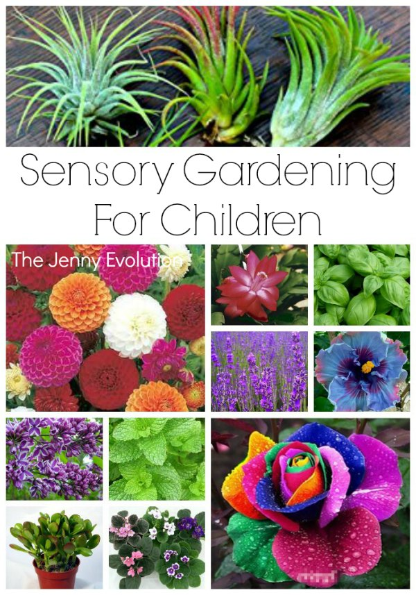Sensory Garden Ideas for Children - Gardening with Kids!