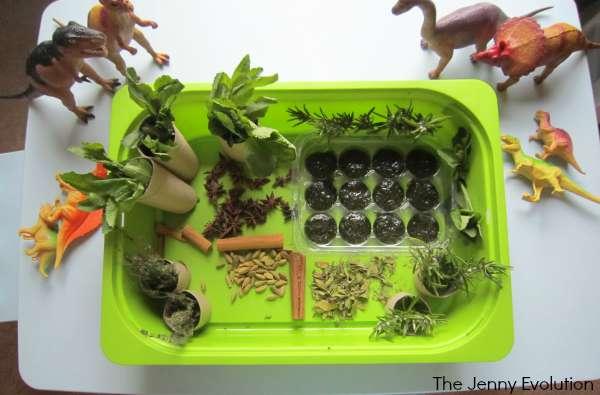 Dinosaur Smelly Swamp Sensory Bin Using Herbs! (Food Sensory Activities) | The Jenny Evolution