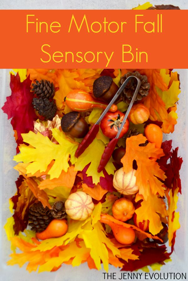 Fine Motor Fall Sensory Bin + Visual Skills! on The Jenny Evolution