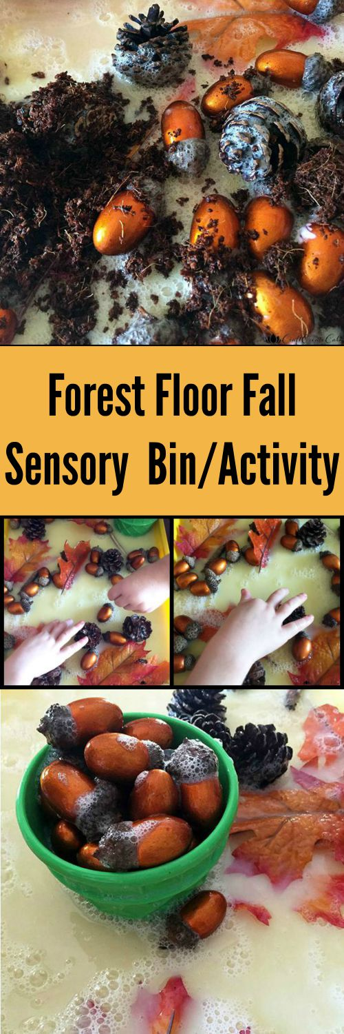 Forest Floor Fall Sensory Bin and Activity for Kids | The Jenny Evolution