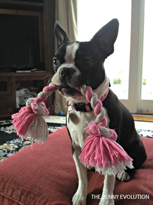 Lucy Ready to Play