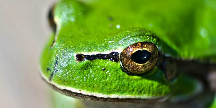 close up of green frog - frog books