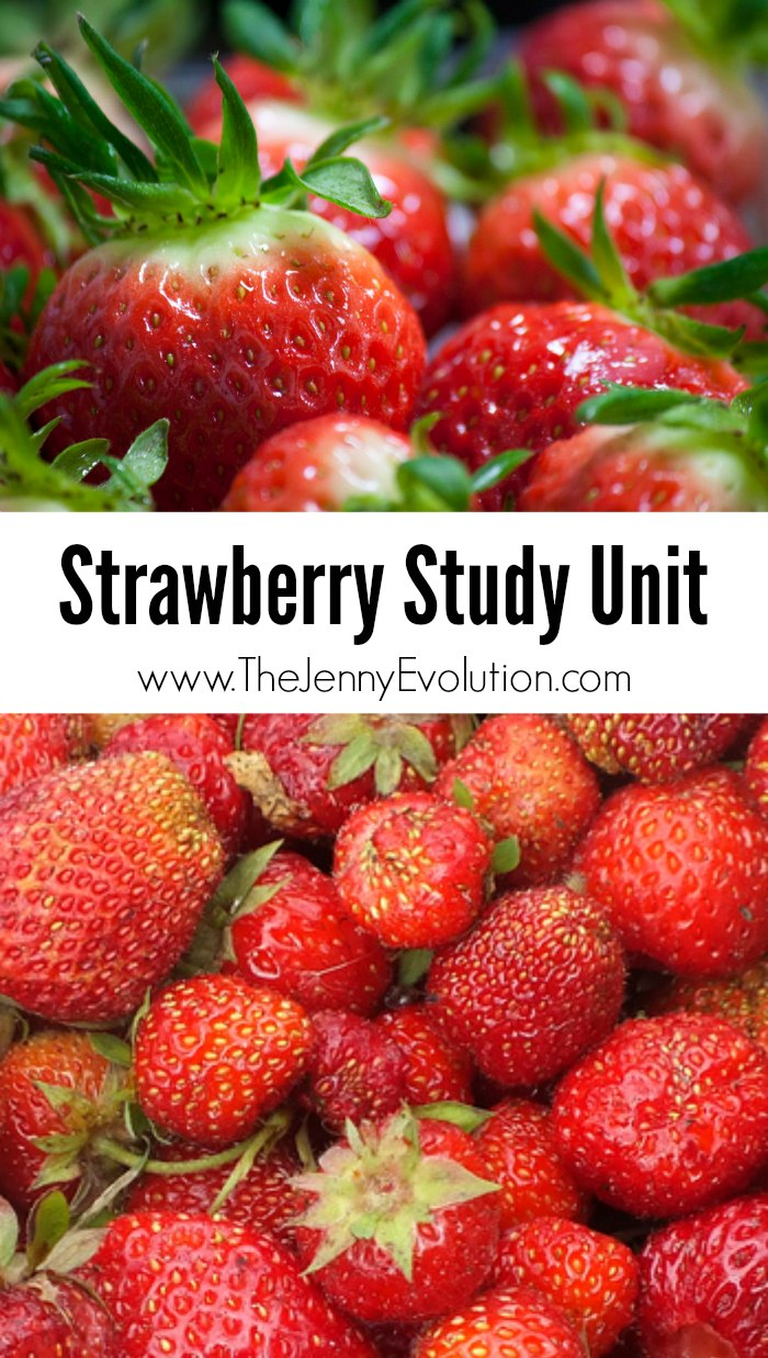 Strawberry Study Unit + Strawberry Lemonade Recipe