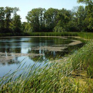 Greenbelt Pond
