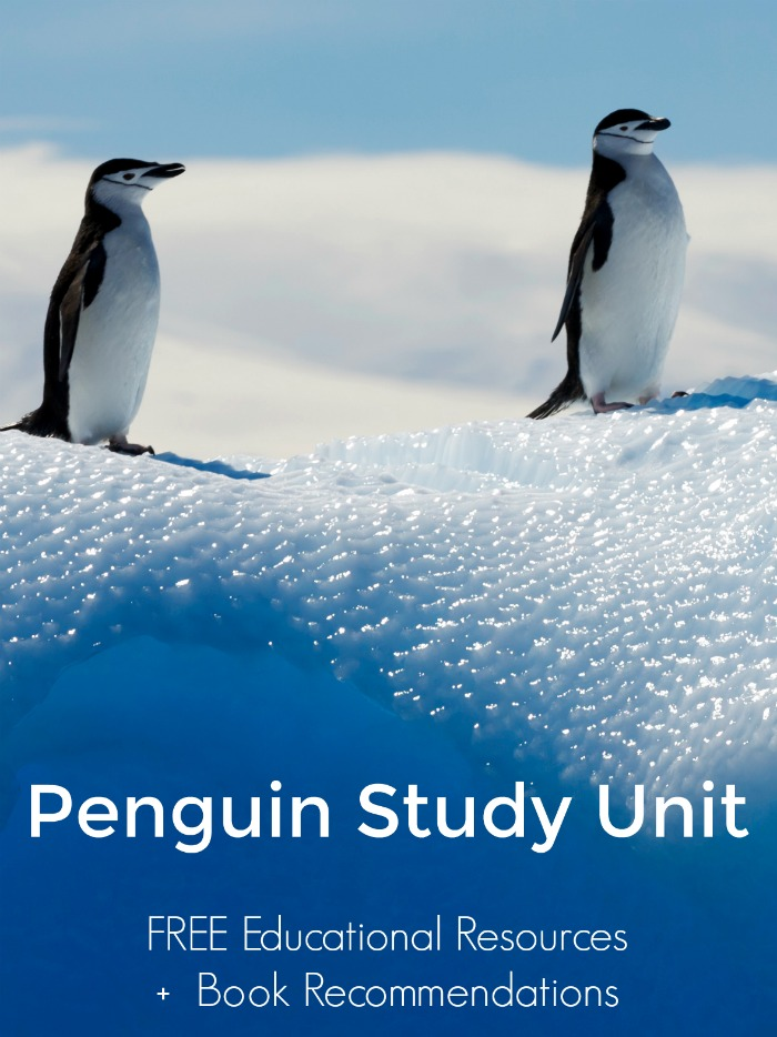 Penguin Study Unit | Mommy Evolution