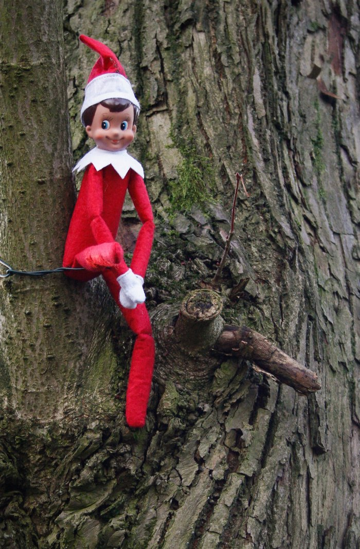 Elf on the Shelf stuck up in a tree.