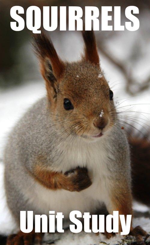 Squirrels Unit Study Resources and Ideas + Children's book list | Mommy Evolution