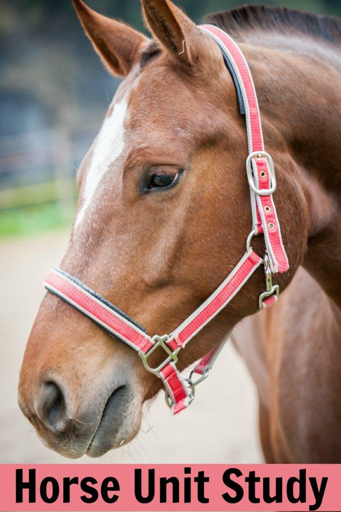 Horse Unit Study + Horse Books for Kids | Mommy Evolution