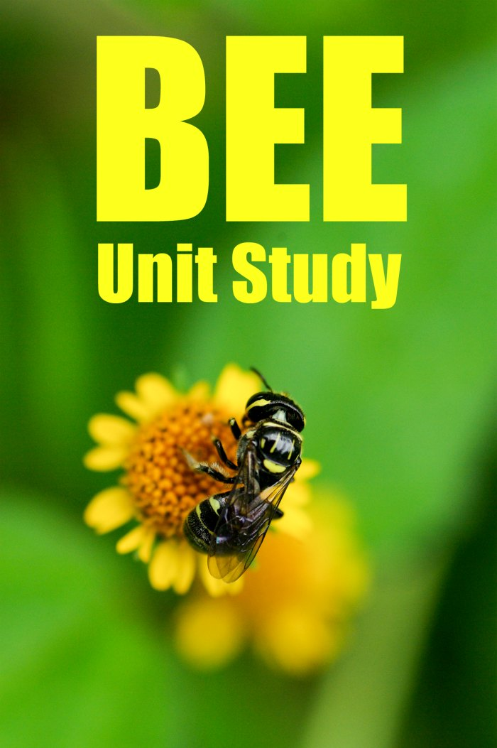 Bee Unit Study - Learn all about the wonder of bees! for homeschool and classroom + Books about Bees Reading List | Mommy Evolution