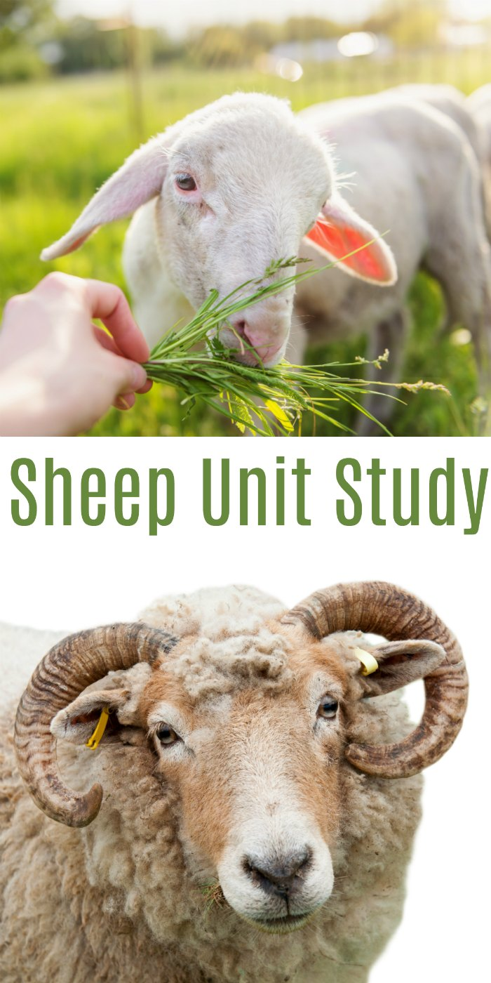 Sheep Unit Study + Books about Sheeps Reading Recommendations | Mommy Evolution