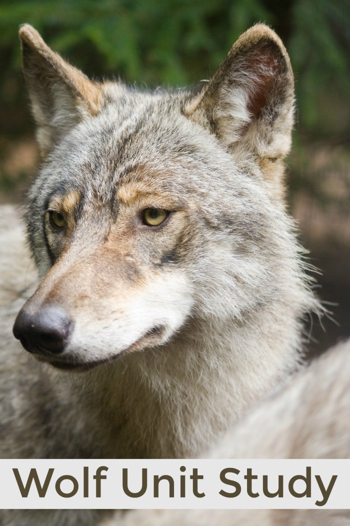 Wolf Unit Study + Books about Wolves for children | Mommy Evolution
