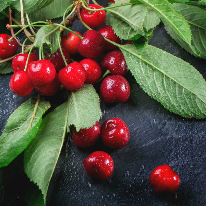 Branch of fresh cherries with leaves on black background. Square image, selective focus