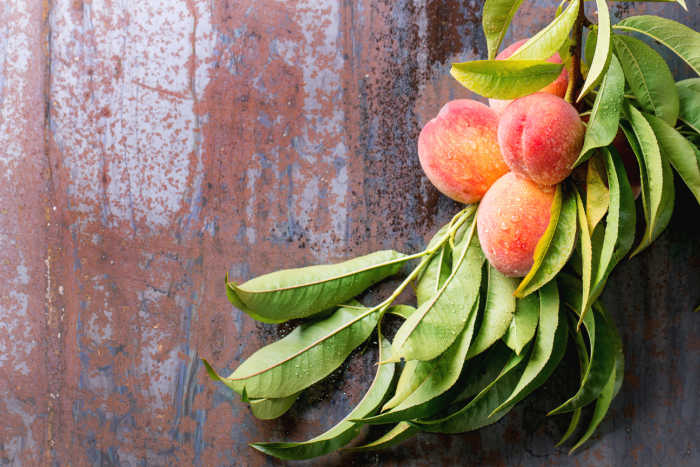 Peaches on branch with leaves on old metal background. Top view.